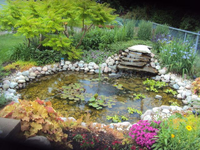 Furniture , 6 Backyard Pond Ideas : cute-backyard-pond-ideas