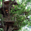 small house designs , 7 Excellent Livable Tree Houses In Homes Category