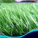 Artificial Grass Carpet , 7 Fabulous Astro Turf Rug In Others Category