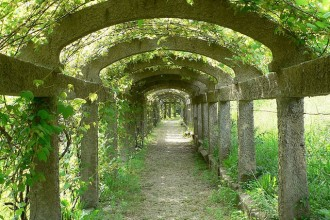 640x520px 6 Awesome  Grape Arbor Picture in Others