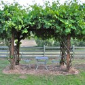 pergola ideas.. , 6 Awesome Grape Arbors In Others Category